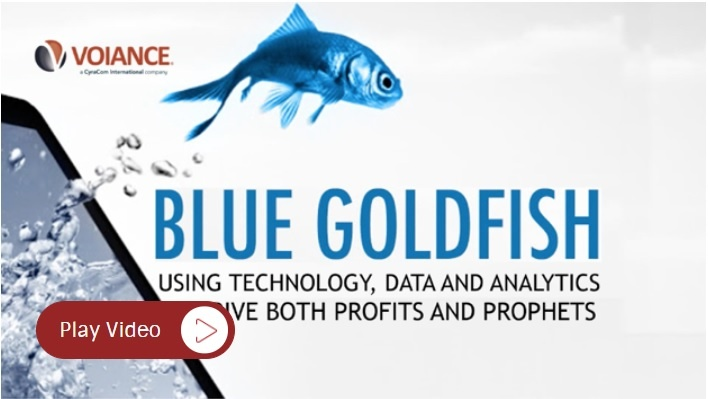 Blue goldfish.jpg